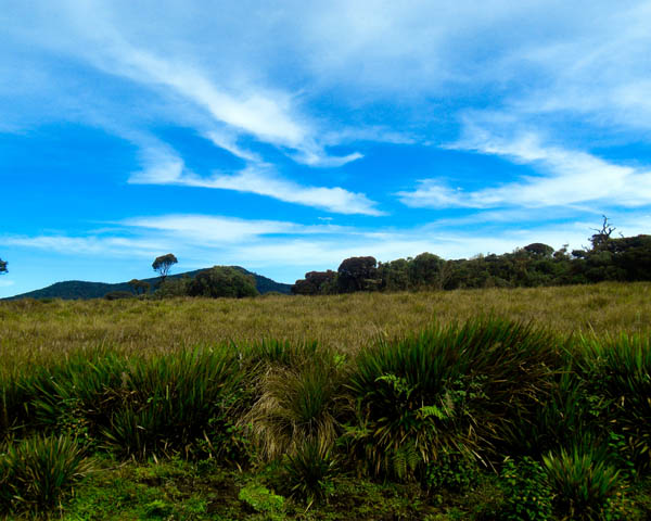 Horton Plains-3621